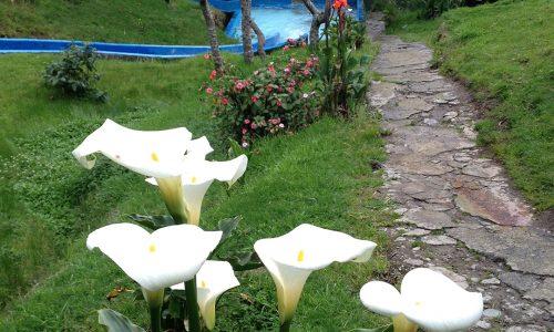 flores tobogan
